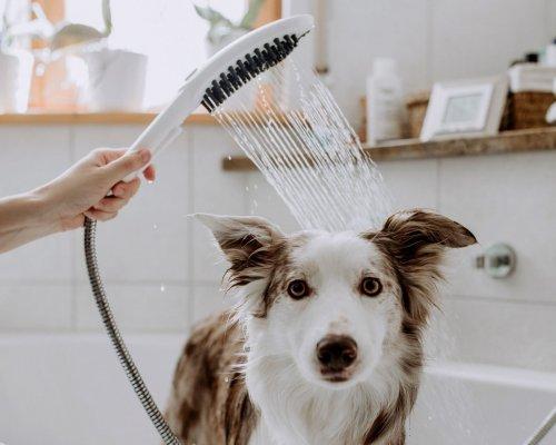 5 důvodů, proč si pořídit speciální sprchovou hlavici pro psy